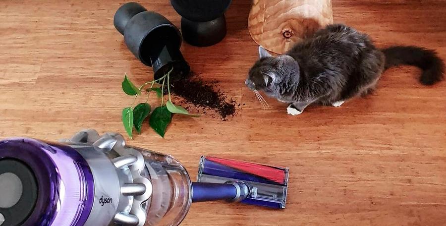 En el pelo de las mascotas se concentran ácaros y contribuye a la formación de polvo y otros contaminantes. Conoce cómo evitarlo